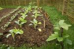 ogrodzony warzywniak